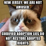 Grumpy cat adoption